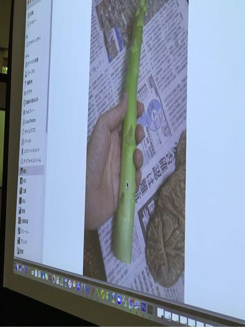 藤井さんのアスパラは、人差し指の付け根くらいの太さで、サクっと柔らかい。